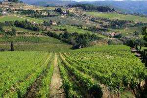 Vineyards in the Tuscan region